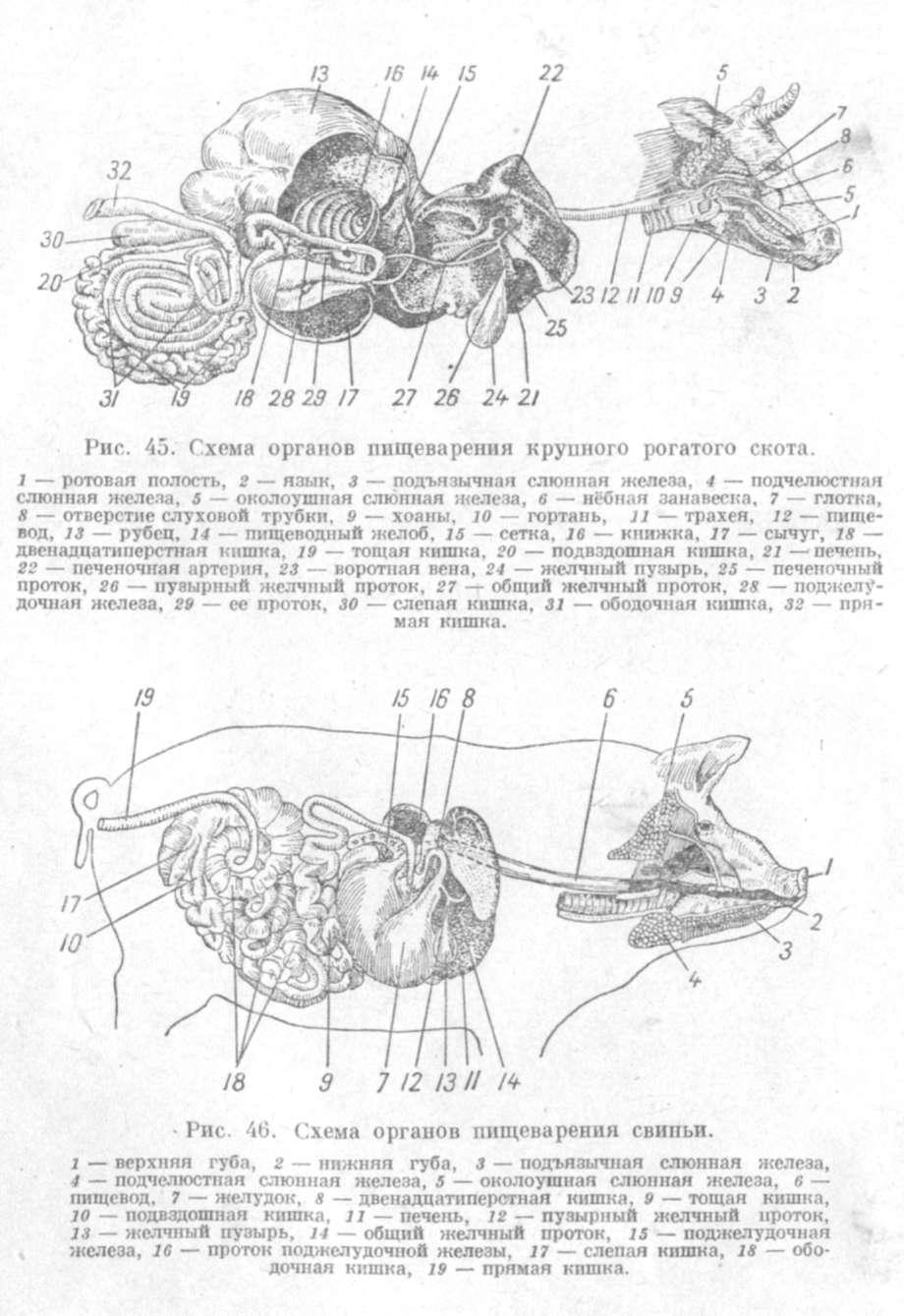 Системы органов животных схема фото 983